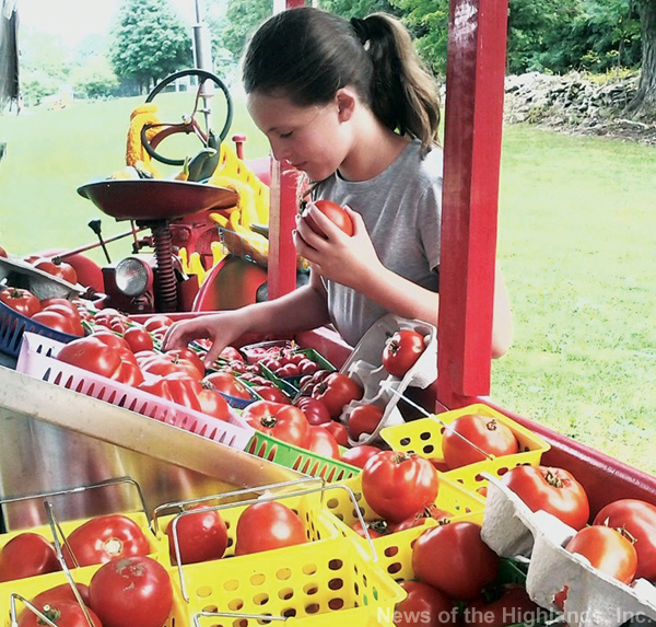 Photo by Suzanne Tagliaferro Sixth-grader Madeline Camo examines the tomatoes at an Angola Road farmstand on a weekday afternoon. How would she know which ones taste best.