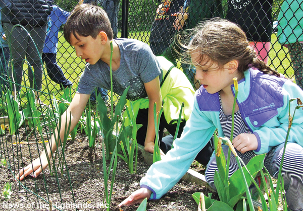 Over the last month, Master Gardeners from the Cornell Cooperative Extention have been meeting with the third grade classes, at Cornwall Elementary School, and assisting them in the garden adjacent to the school.