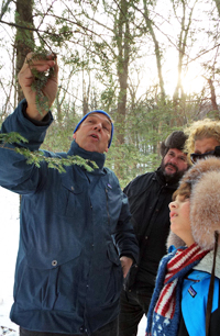 Black Rock Forest Director William Schuster points out small cottony puffs on the underside of the Eastern Hemlock's branches. These contain the larva of the Hemlock Wooly Adelgid.